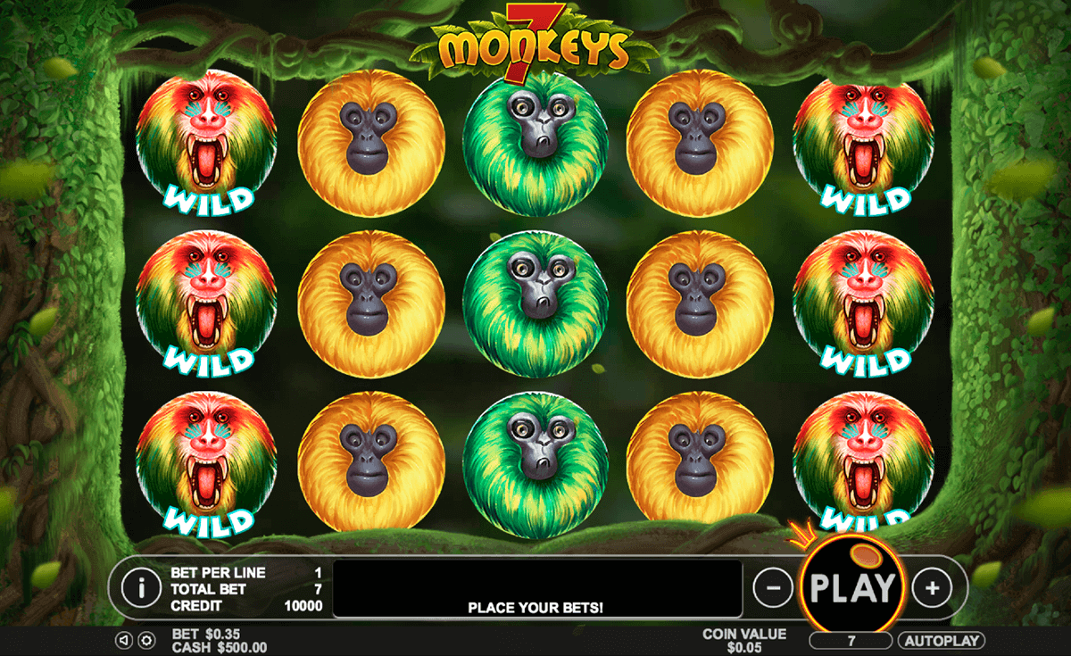 7 Monkeys at sapphire rooms